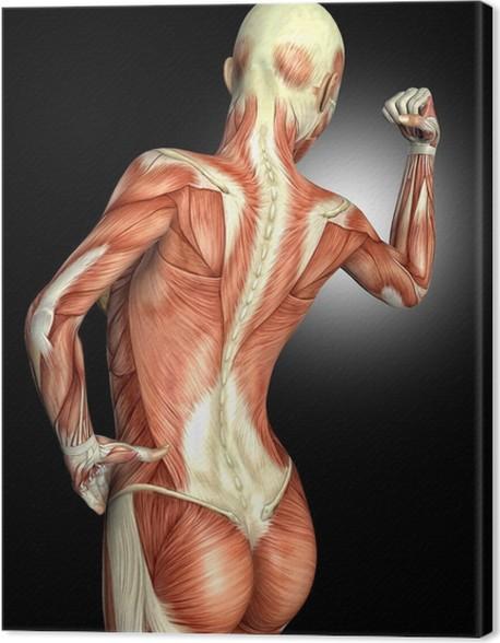 Leinwandbild Anatomie eines weiblichen Rückens • Pixers® - Wir leben ...