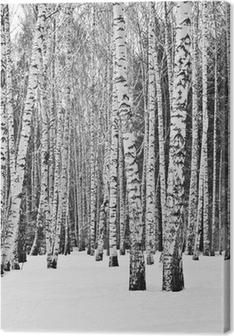 Leinwandbild Birkenwald im Winter in schwarz und weiß