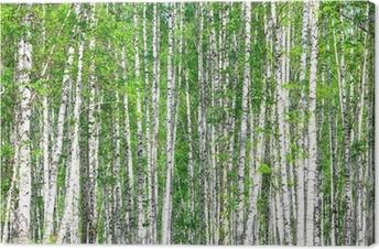 Leinwandbild Birkenwald. Mai