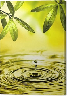 Leinwandbild Blätter Hängen über Wasser