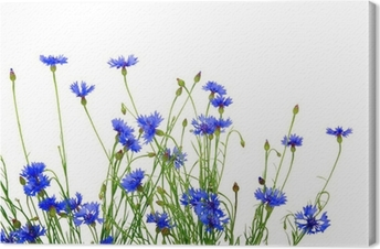 Leinwandbild Blaue Kornblumen