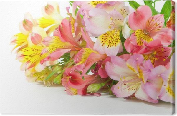 Leinwandbild Bouquet von Inkalilie Blumen auf einem weißen ...