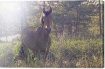 Leinwandbild Braunes Pferd mitten in einer Wiese im Gras, die Strahlen der Sonne, getont.