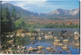 Leinwandbild Bull Moose Fütterung im Teich unten Berg Katahdin, Maine