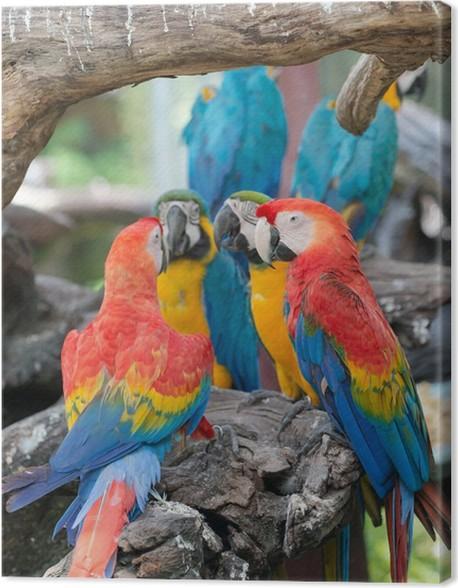 Leinwandbild bunt von ara papageien pixers wir leben - Leinwandbild bunt ...