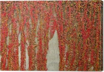 Leinwandbild Bunte Schlingpflanzen bedeckt Wand aus Beton. Herbstfarben.
