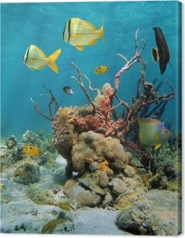 Leinwandbild Bunte Unterwasserwelt mit Korallen und Schwämme