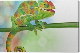Leinwandbild Chamäleon und Farben