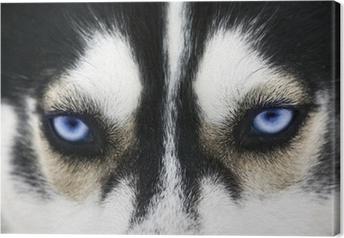 Leinwandbild Close up auf blauen Augen eines Hundes