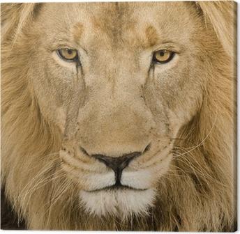 Leinwandbild Close-up auf einem Löwenkopf (4 und ein halbes Jahr) - Panthera leo
