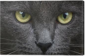 Leinwandbild Close up Portrait von grauen Kätzchen