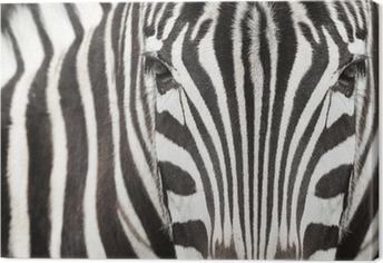 Leinwandbild Close-up von Zebra Kopf und Körper mit schönen Streifenmuster