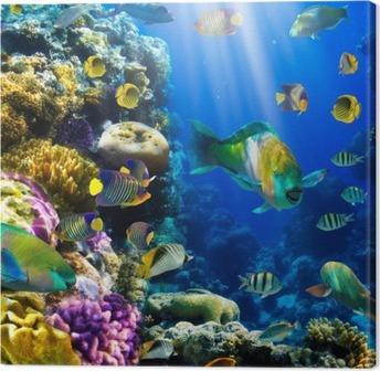 Leinwandbild Coral Kolonie und Korallenfische