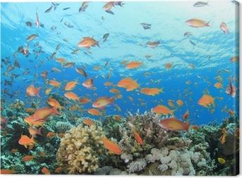 Leinwandbild Coral Reef Unterwasser