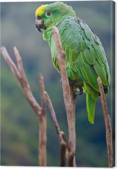Leinwandbild Costa Rica grüner Papagei