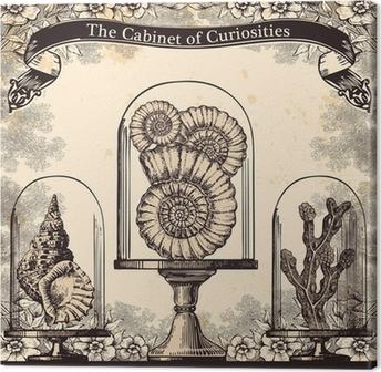 Leinwandbild Das Kabinett der Kuriositäten