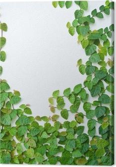 Leinwandbild Die grüne Kletterpflanze an der Wand für Hintergrund.