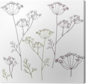 Leinwandbild Dill oder Fenchel Blumen und Blättern.