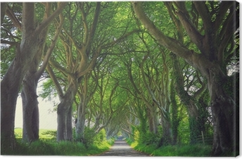 Leinwandbild Dunkle Bäume Hedges