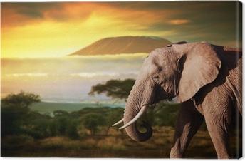 Leinwandbild Elefant auf Savanne. Mount Kilimanjaro bei Sonnenuntergang. Safari