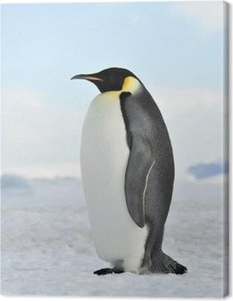 Leinwandbild Emperor Penguin