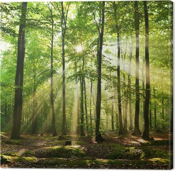 Leinwandbild Forst