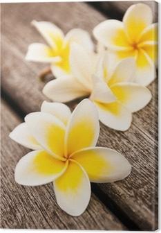 Leinwandbild Frangipani-Blüten, Holz Hintergrund