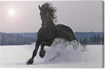 Leinwandbild Friesisch Pferd auf Schnee