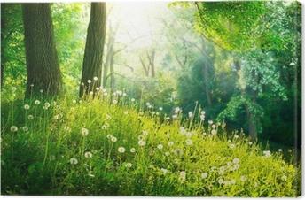 Leinwandbild Frühling Natur. Schöne Landschaft. Grünes Gras und Bäume