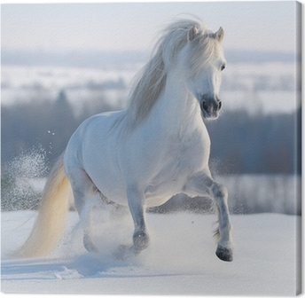 Leinwandbild Galloping weißen Pferd