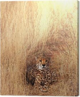 Leinwandbild Gepard
