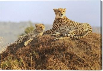 Leinwandbild Geparden auf der Masai Mara in Afrika