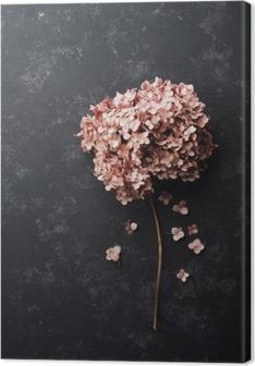 Leinwandbild Getrocknete Blumen Hortensie auf schwarzem Ansicht Vintage-Tischplatte. Wohnung lag Styling.