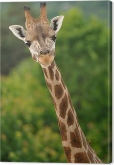 Leinwandbild Giraffe Kopf und Hals