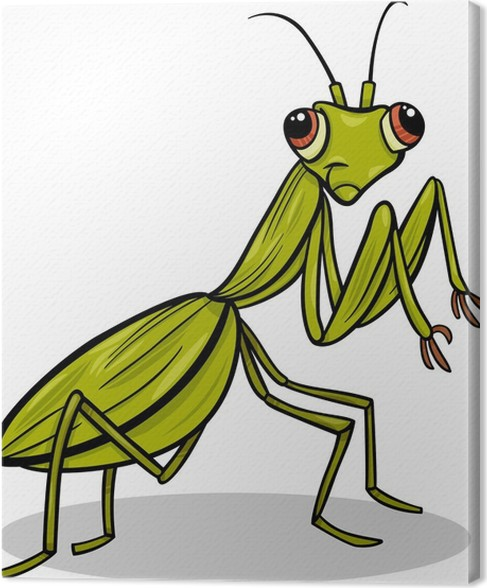 Leinwandbild Gottesanbeterin Insekt Cartoon-Abbildung • Pixers ...