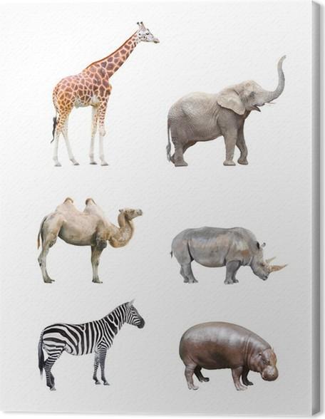 Leinwandbild Große Sammlung Von Großen Afrikanischen Säugetiere.