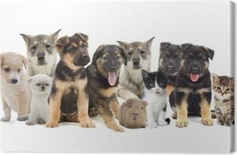 Leinwandbild Gruppe von Haustieren