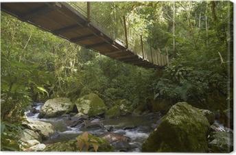 Leinwandbild Hängebrücke im Regenwald