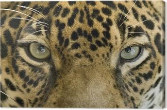 Leinwandbild Hautnah die Augen einer schönen Jaguar oder panthera onca
