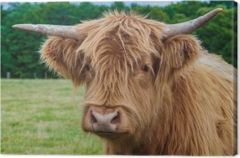 Leinwandbild Hochland-Longhorn-Vieh