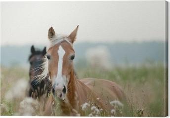 Leinwandbild Horses in Field