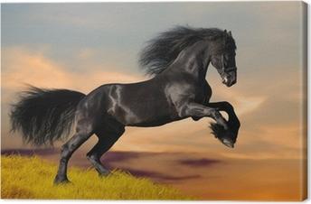 Leinwandbild In den Sonnenuntergang galoppierendes schwarzes Pferd