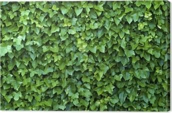 Leinwandbild Ivy wall