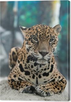 Leinwandbild Jaguar - Panthera onca
