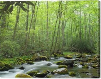 Leinwandbild Jungle Stream