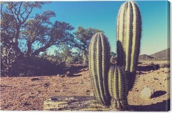 Leinwandbild Kaktus in Mexiko