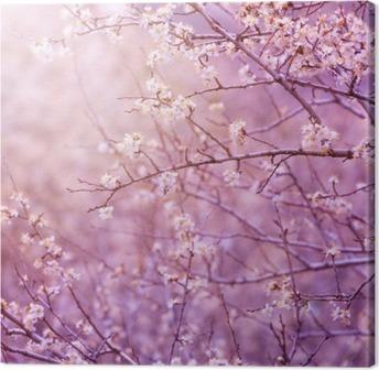 Leinwandbild Kirschblüte