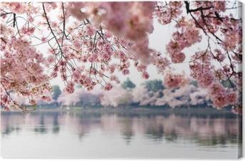 Leinwandbild Kirschblüten über Tidal Basin in Washington DC