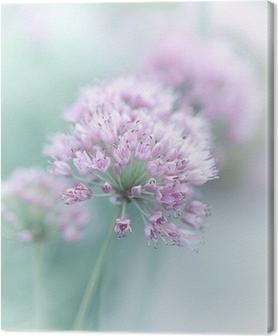 Leinwandbild Knoblauch Blumen