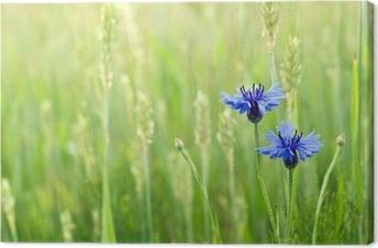 Leinwandbild Kornblumen in einem Feld